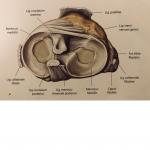 Jakie są przyczyny izczego się składa proces leczenia łąkotki?